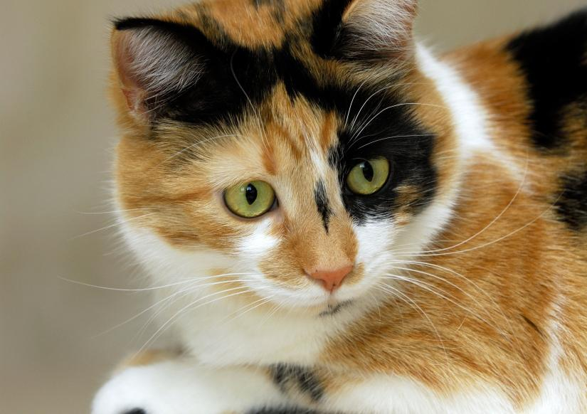 Cat sitters in Richmond, Hammersmith, Chiswick, Mortlake