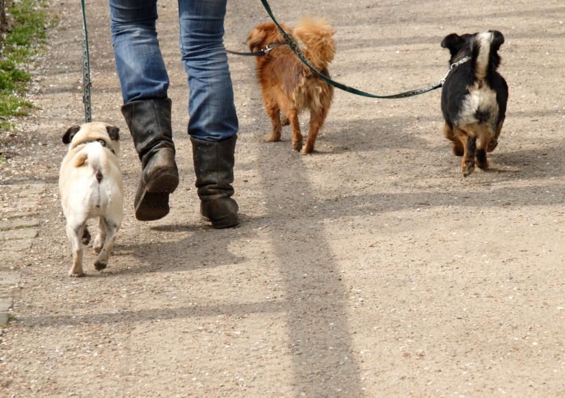 Dog Walkers In Barnes Ealing Brentford Chiswick Hammersmith Acton